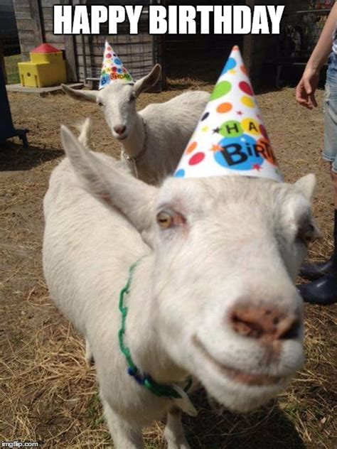 Happy Goat Meme - goat birthday imgflip