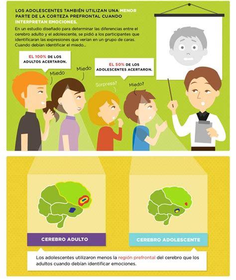 cerebro adolescente el desarrollo del cerebro adolescente monografias com