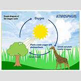Oxygen And Carbon Dioxide Cycle Simple   600 x 450 png 51kB