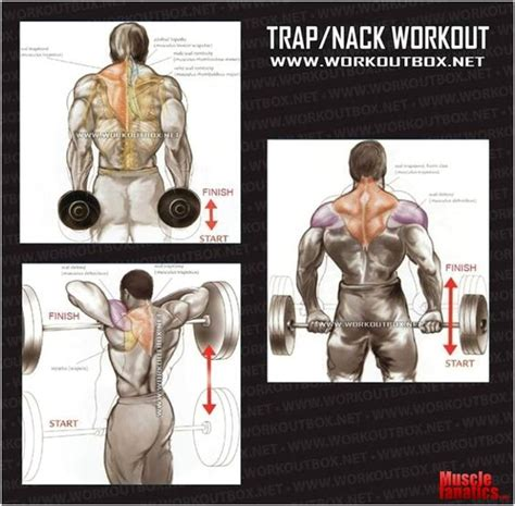 traps workout exercise and workout on