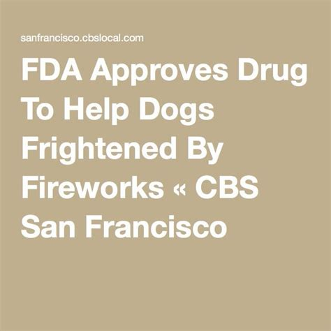 shih tzu trembling fda approves to help dogs frightened by fireworks 171 cbs san francisco shih tzu