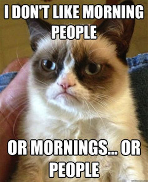 Grumpy Cat Good Morning Meme - funny memes grumpy cat i don t like morning people or