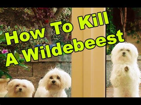 how to kill dogs talking dogs ep 2 how to kill a wildebeest