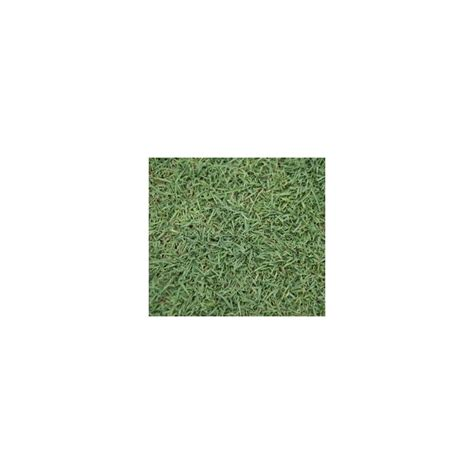 queensland blue couch queensland blue couch lawn seed 100 pure not a blend