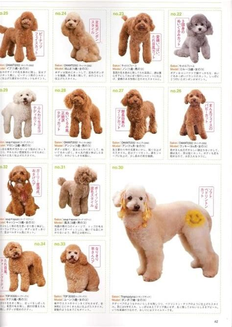 Types Of Dog Grooming Cuts | image detail for share poodle grooming styles here dog