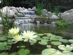 bellas aquatic gardens miami s premier pond contractor