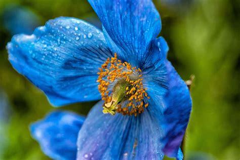 fiore pistillo foto gratis rugiada pioggia estate fiore foglia
