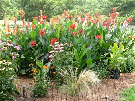 two men and a little farm cannas in a flower garden inspiration thursday