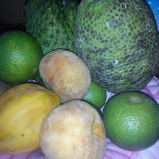 guyana fruit trees fav fruits of guyana guyana fruit