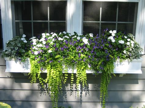A Window Box Planter by Window Planter Box