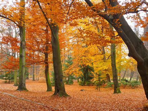 lavori in giardino lavori in giardino per l autunno cecconi