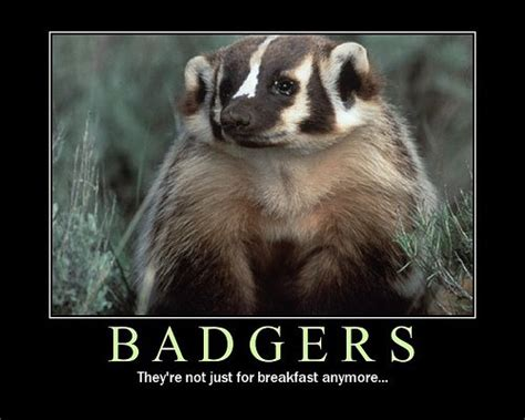 Badger Memes - badger meme 28 images livememe com depressed badger