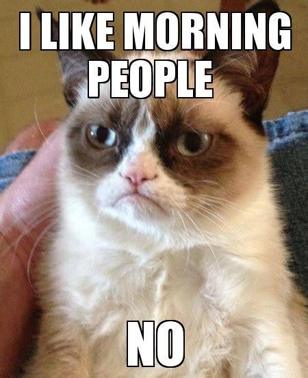 Morning People Meme - cat memes funny memes page 2