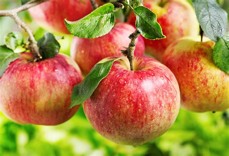 can a eat an apple an apples a day can really keep healthy according to study alkaline