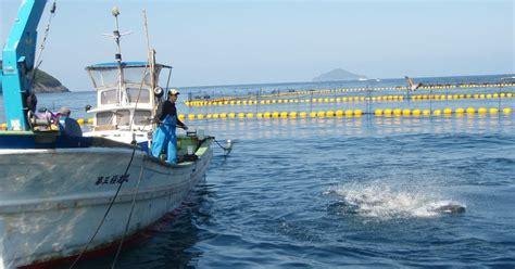 Pelet Apung Ikan Gurame cara ternak kambing ternak ikan gurame