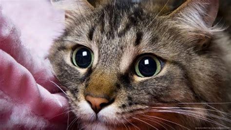 unexpected ways  cat     love