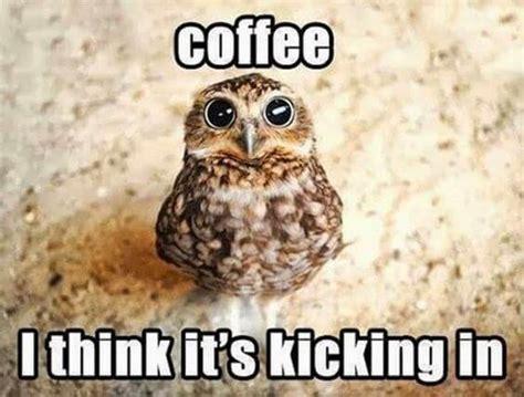 Owl Memes