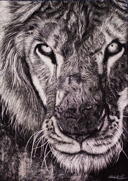 lion zentangle recruitment school spirit pinterest 83 best tigers drawing and painting tigers images on