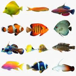 Aquarium Fish Collection