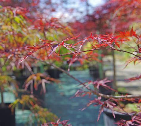 piante e arbusti da giardino alberi e arbusti da giardino sempreverdi con fiori