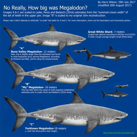 megalodon shark size megalodon size part 2 by harry the fox on deviantart