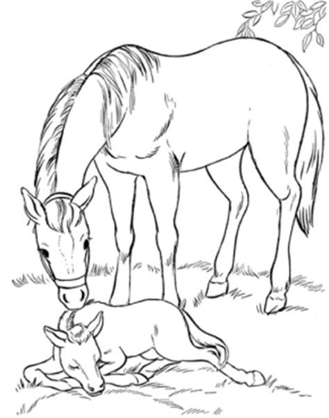 coloring pages of horses and dogs dogs dog9 animals coloring pages coloring book