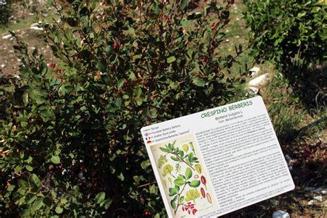 giardino officinale visita guidata al giardino officinale di sprea domenica
