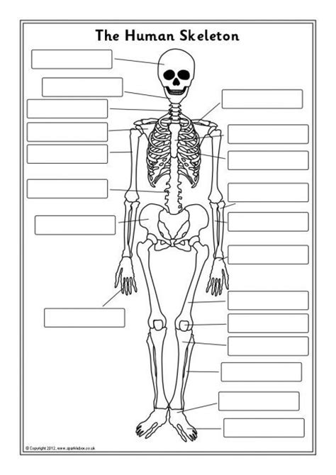 printable label the skeleton skeleton label worksheet resultinfos