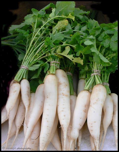 radish daikon heirloom vegetable seed radish daikon vegetsble seed heirloom radish daikon seeds