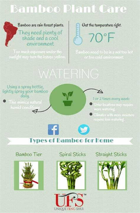 desk plant maintenance helpful tips to care for plants how to water and properly care for a feng shui lucky