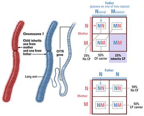 prenatal test diagnosis testing prenatal screening johns