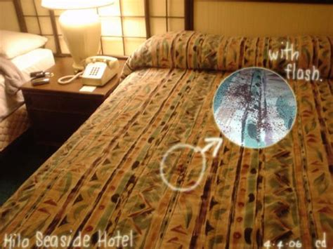termite faeces  bed picture  hilo seaside hotel tripadvisor