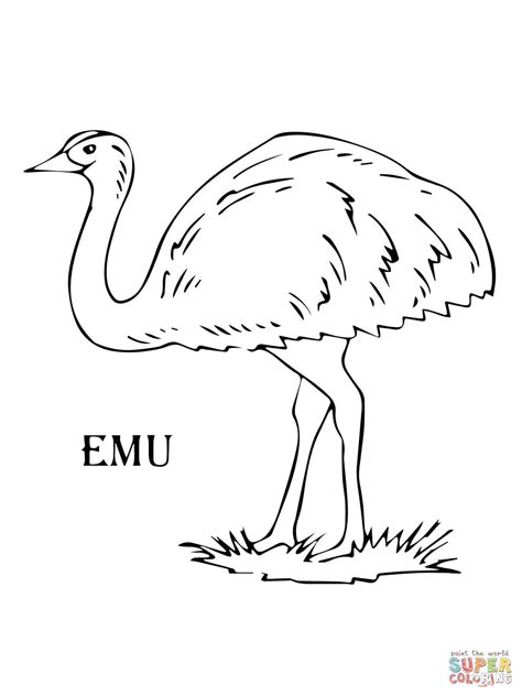 Emu Coloring Page Free | emu coloring pages printable emu best free coloring pages