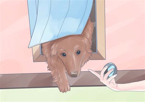 how to train your dog to use the bathroom outside how to train your dog to use a dog door 8 steps