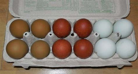chickens that lay colored eggs are there chickens that lay colored eggs if so which
