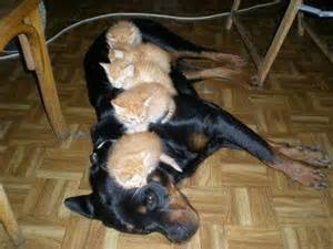 cute kittens funny dogs   dump a day
