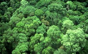 Canopy Plants In The Rainforest by Rainforest Canopy Submited Images
