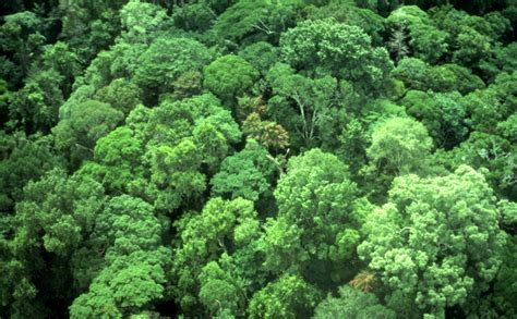 Canopy Definition Rainforest Forest Canopy Definition 28 Images Ecuador Breaks