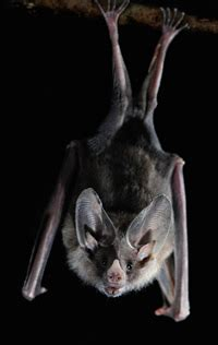 backyard bats learn all about attracting beneficial