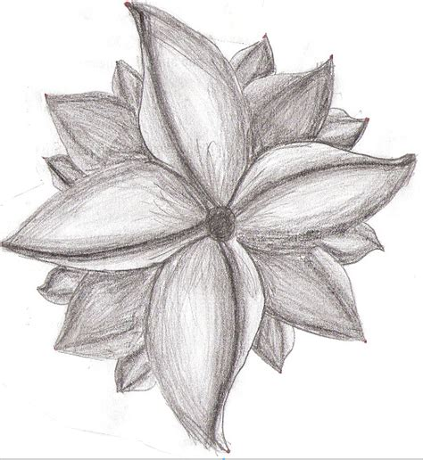 Drawings Of Flowers by Pencil Drawings Pencil Drawings Of Flowers