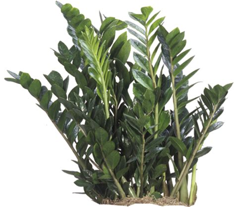 plants that need low light low light plants indoor plants house plants in boston ma evergreen tropical interiors inc