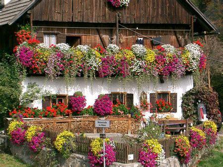 terrazze fiorite foto migliori piante ricanti da balcone