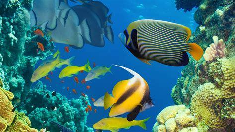 coral reef uhd  wallpapers top  coral reef uhd