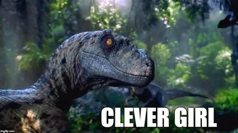 Clever Girl Meme - clever girl memes pinterest clever