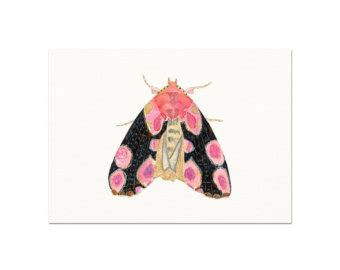 baby moths in bedroom pink watercolor butterfly art print pink and black butterfly