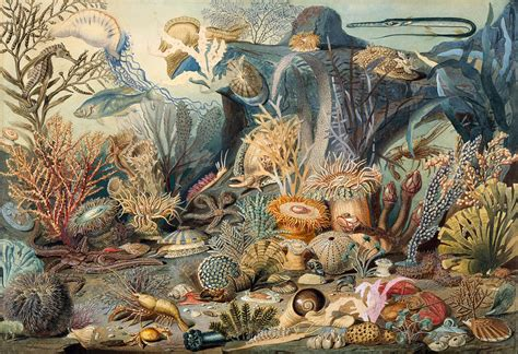 biography of a fine artist ocean life drawing by james m sommerville