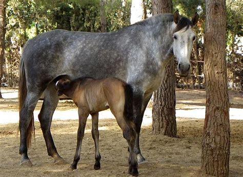 fotos caballos verga parada mamando burro videos de zoofilia de hombres con mascotas