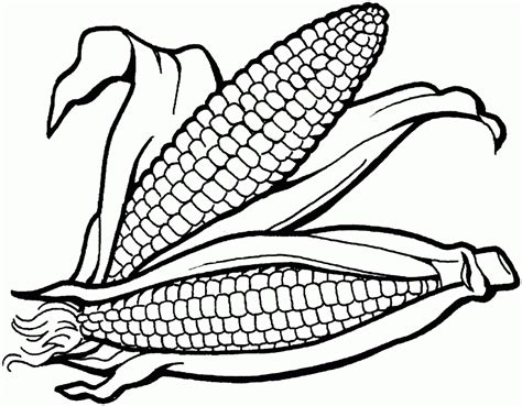 coloring page ear of corn ear of corn coloring page aecost net aecost net