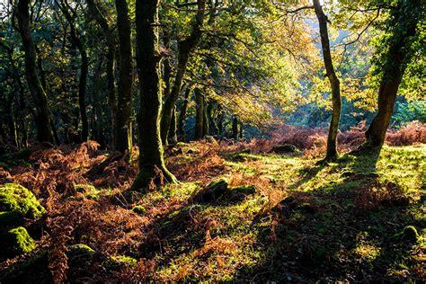 imagenes naturaleza otono fondos de pantalla bosques oto 241 o el tronco naturaleza