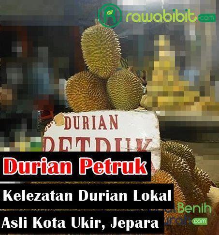 durian petruk mancungnya kelezatan buah durian lokal